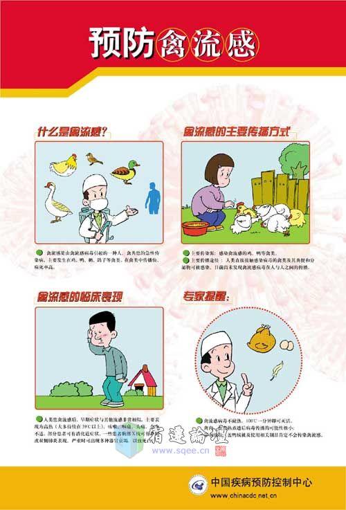 预防禽流感宣传图片图片