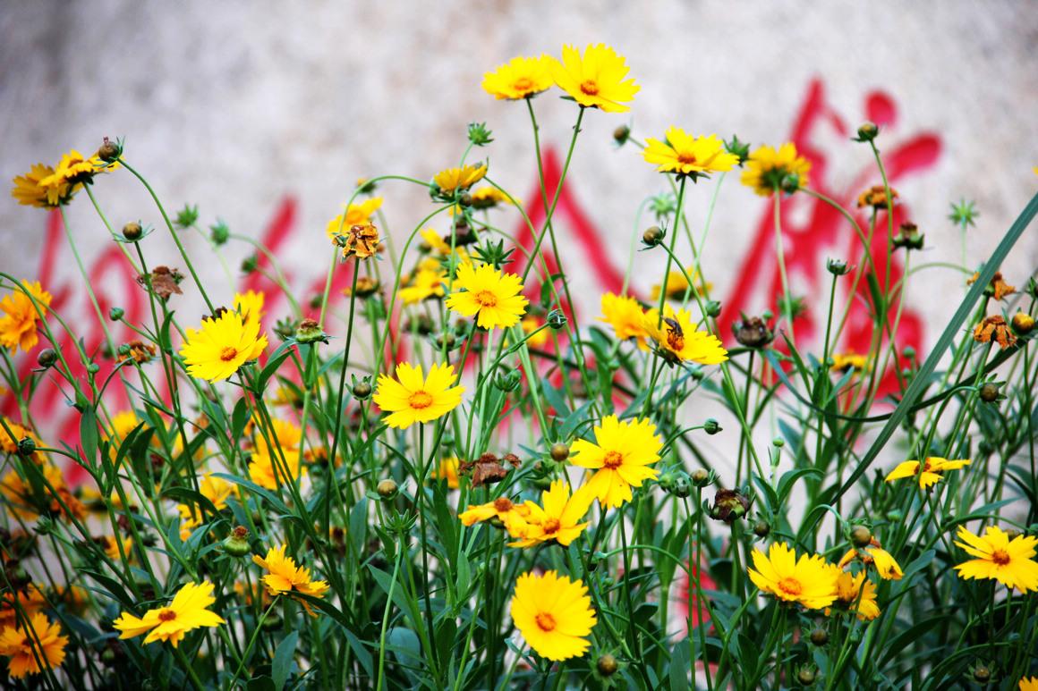 雪枫公园后面的小花
