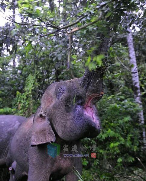 沙巴热带雨林,动物的家园
