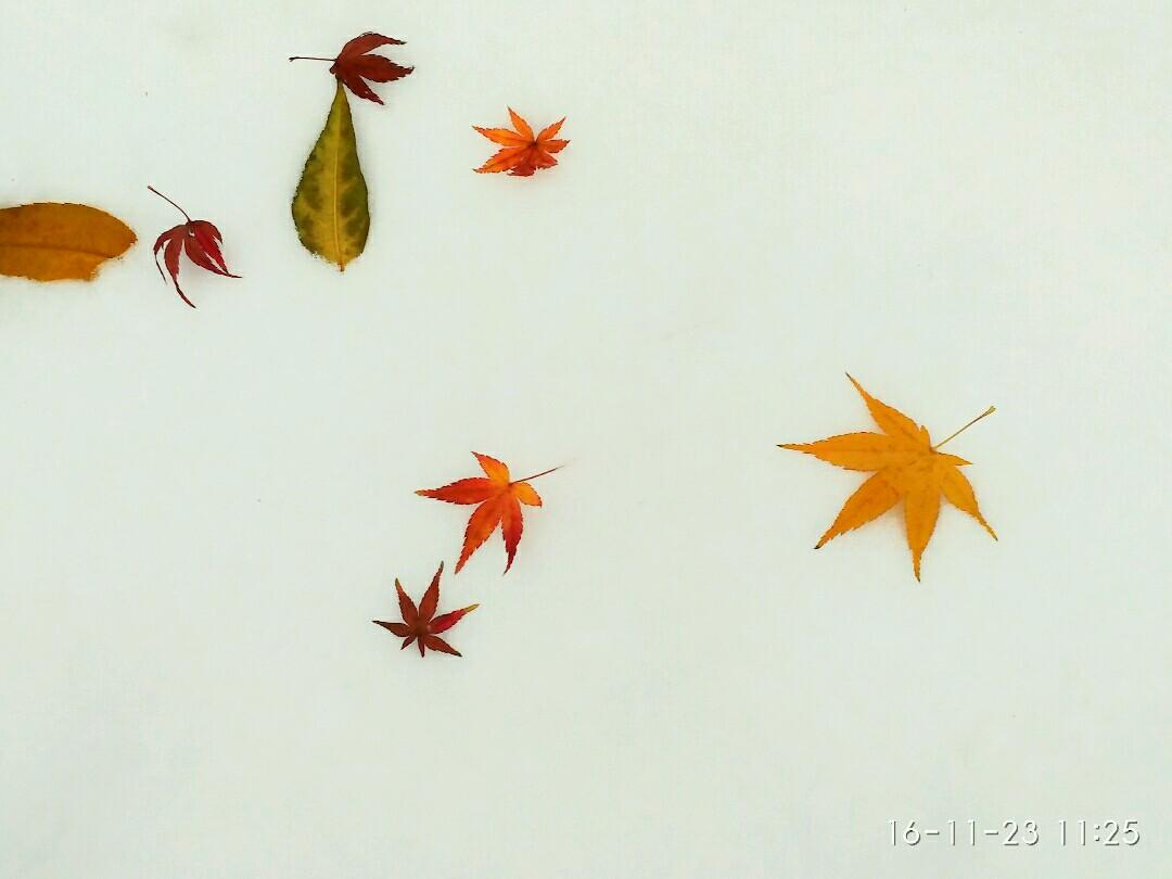 题诗满红叶何必浣花暖,动物谜底