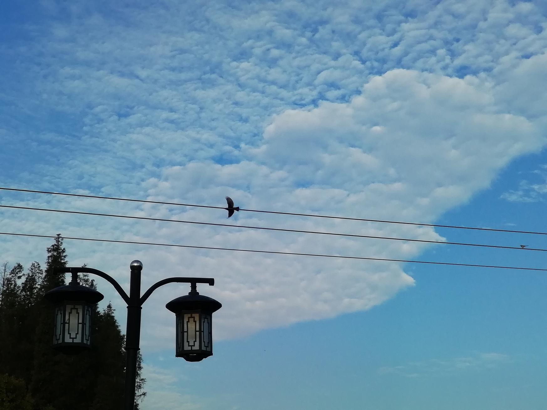 蓝天白云绿树叶