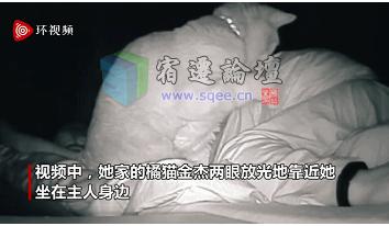 女子醒后异常疲惫,看监控发现夜里被猫打了4小时